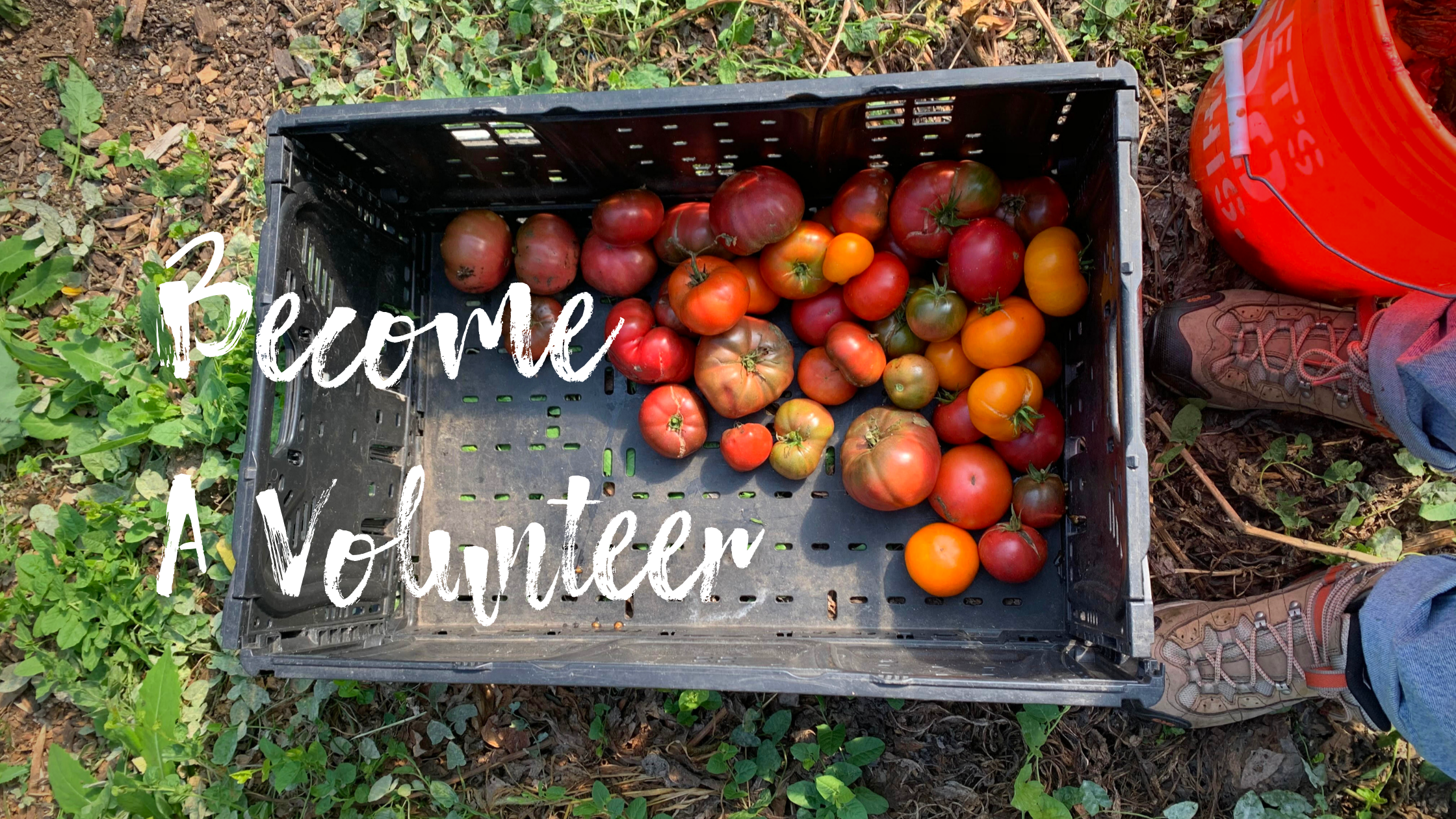 Fill out one of the applications below if you would like to become a community gardener with urban growers collective in 2021! (5)