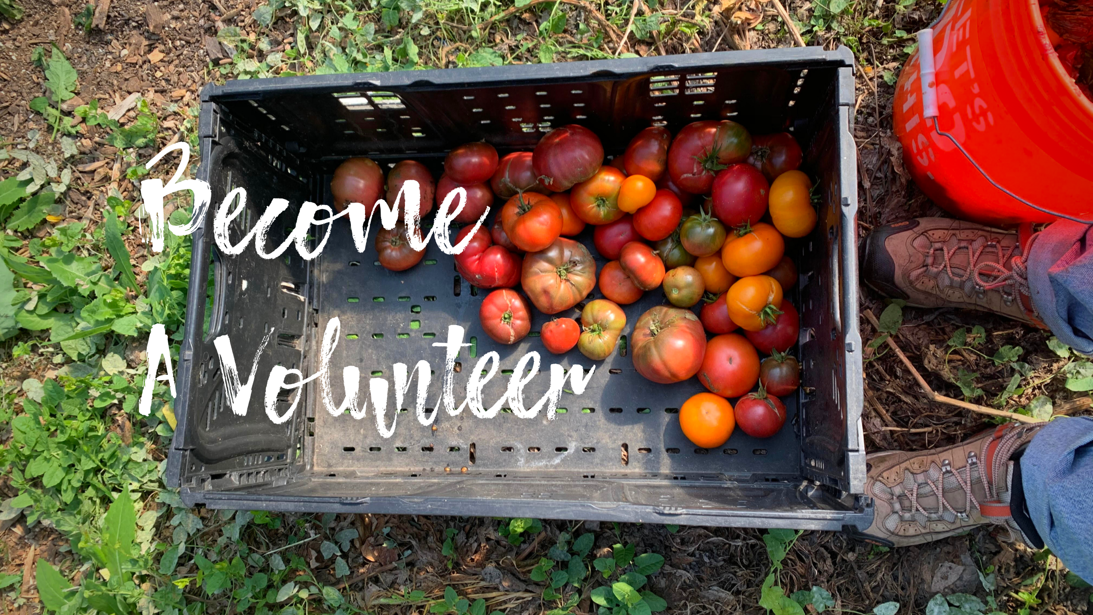 Fill out one of the applications below if you would like to become a community gardener with urban growers collective in 2021! (7)