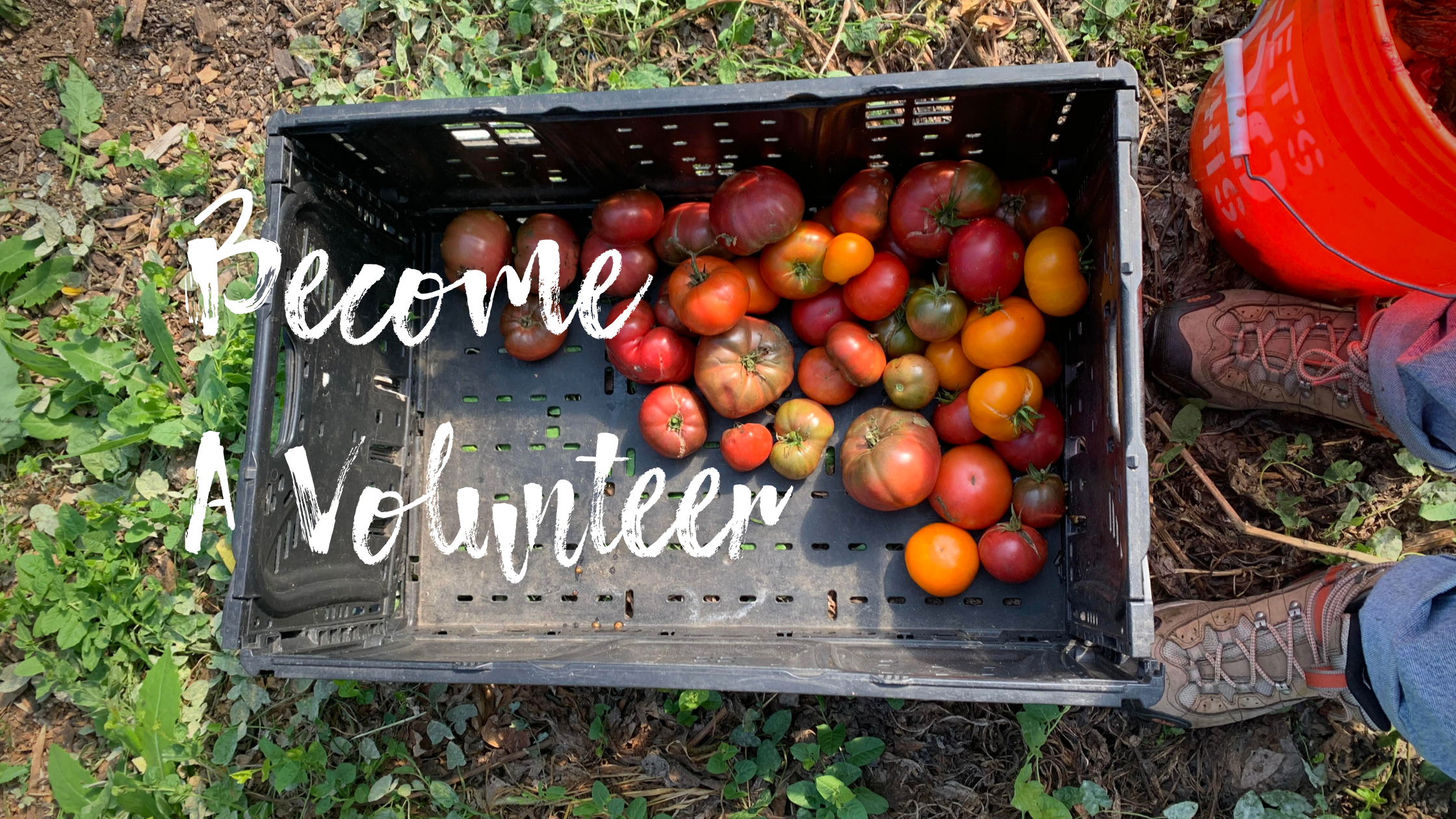 Fill out one of the applications below if you would like to become a community gardener with urban growers collective in 2021! (8)